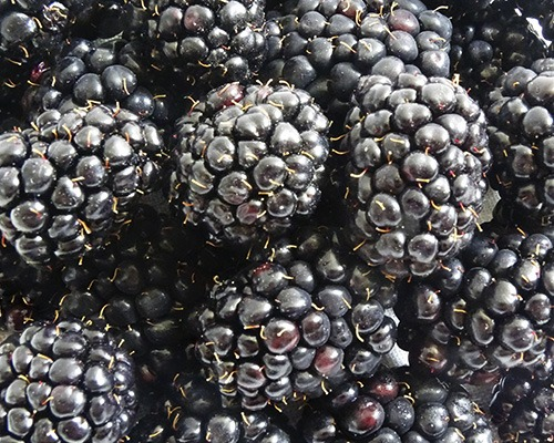 Moras Only